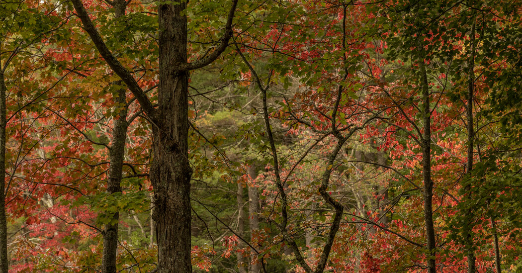 Joyce Maynard's Guide to Fall in New Hampshire